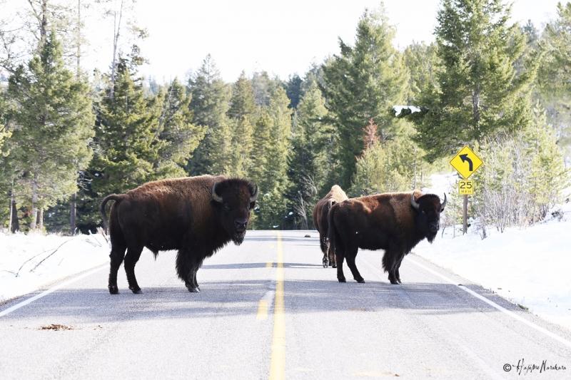 US Road Trip 2015