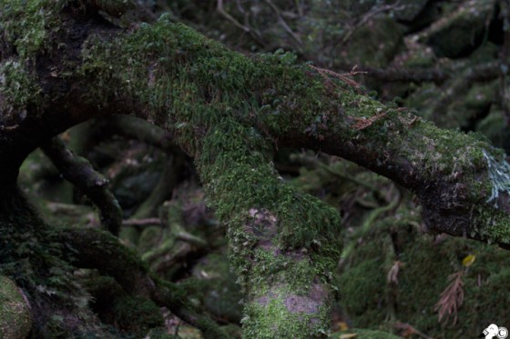 屋久島 縄文杉
